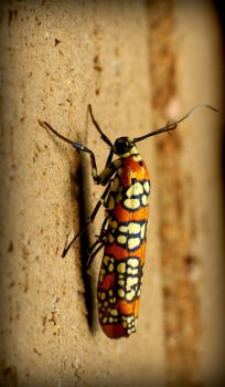 Spotted Bug by explicitly