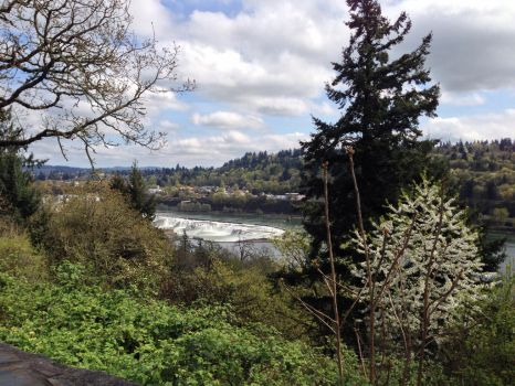 Mossy trees overlooking river by mountainliongrl