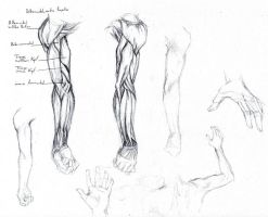 Arm study by Alagvaile