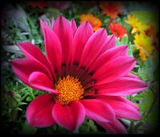 A Flower for Lili by JocelyneR