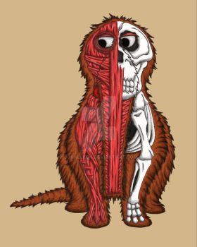 Snuffleupagus MusculoSkeletal Dissection by jjkalleck