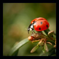 Coccinelle II by Ernestine-SB
