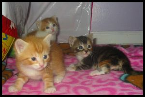 Kittens by Laurie4000
