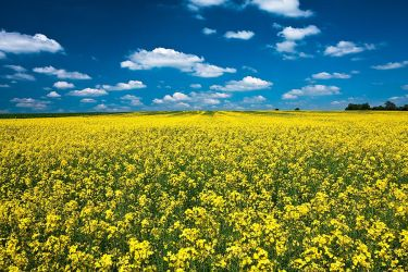 The Rape Field by PeteLatham