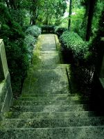 Forest Steps by TopDroPics