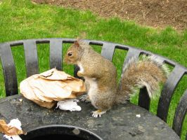 Numbnuts the Squirrel by Sunspot01