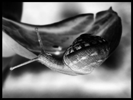 Snail Two by Rosie-Barrett