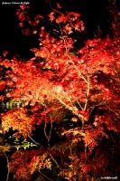 Autumn Colours At Night by SkT0330