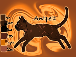 Antpelt of WindClan - Sign of the Moon by Jayie-The-Hufflepuff