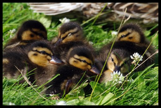 Cute Duckling Overload by Gyroid