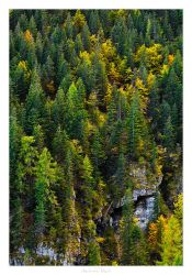 Autumn Forest by AndreasResch