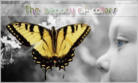 The beauty of colors by Nadientje