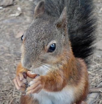 Close to you by Squirrels2poet2queen