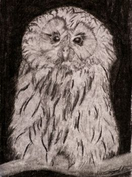 Ural Owl Commission by Half--the--Fun
