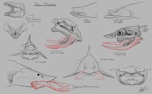 Tusked Shark- Jaw Studies by Atropicus