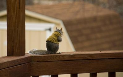Squirrel in Sweater by woobiee