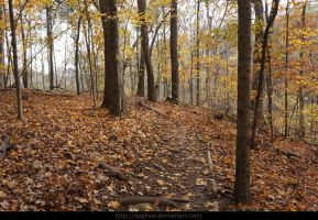 Autumn in the forest_06 by KYghost