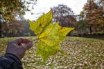 shedding of autumn leaves 6 by Armandacyd