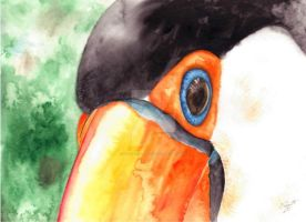 Toucan by GisaPizzatto