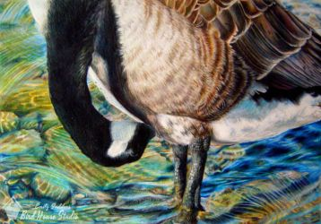 2010 Federal Duck Stamp Entry by emilysodders
