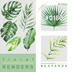 Renders 160 // Tropical Plants Pngs by BEAPANDA