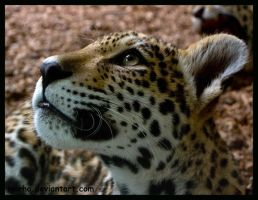 can I eat the flies? by morho