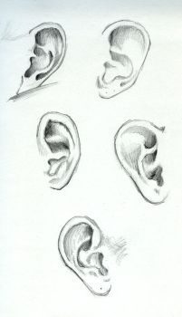 Ear Study by Fro-Daddy