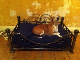 Dog Bed by theforgery