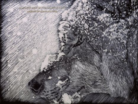 Wolf Scratchboard by AmBr0
