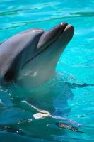 Dolphins at Seaworld 2 by daniellepowell82