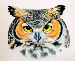 Great Horned Owl by ScarlettRoyale