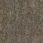 tileable texture mossy tree by ftourini