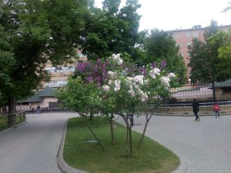 Flowers in Moscow :3 by YuliaRabbid
