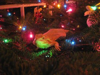 Beardie in a Christmas tree! by NecroHexxer