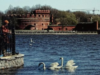 Der Dona And Swans In Koenigsberg by Valdis108