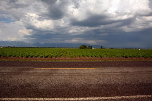 Storm and a Potato Field by BookWeaver