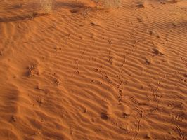 00174 - Rippled Sand with Tracks by emstock