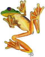 Frog by DolfD