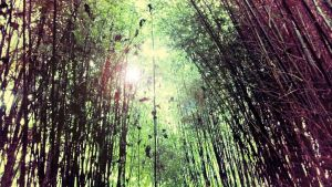Bamboo Copse 1 by VicDillinger
