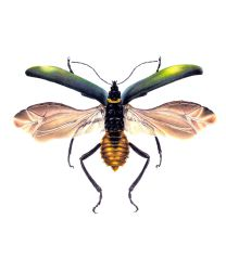 Entomology Submission     Med     2 by RodgerHodger
