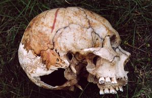skull4-arsenal-greenfeed by arsenal-greenfeed