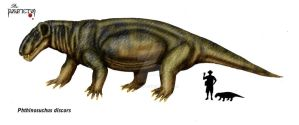 Phthinosuchus discors by Theropsida