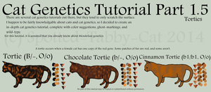 Cat Genetics Tutorial Part 1.5 (Torties) by Spotted-Tabby-Cat