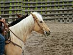 Palomino Quarter Horse by EquineGhost