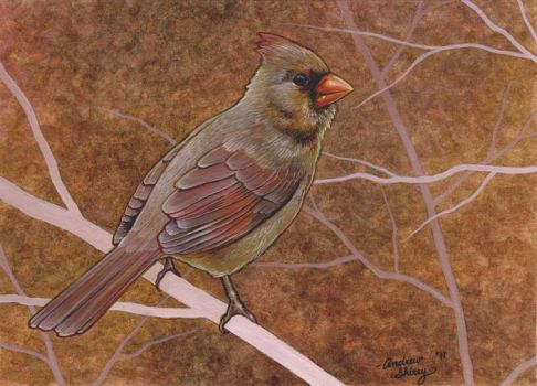 female cardinal w.c. by silentsketcher