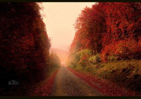 Forest road II by valiunic