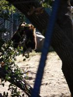 Folsom City Zoo Photo Series10 by lilly-peacecraft