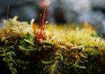 Moss by draconis393