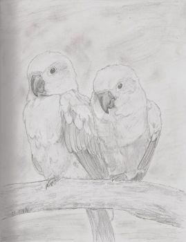 Feathered Couple by LoneWolfSong