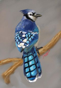 Blue Jay by ArtworkbyDanielWard